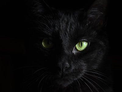 la couleur noire