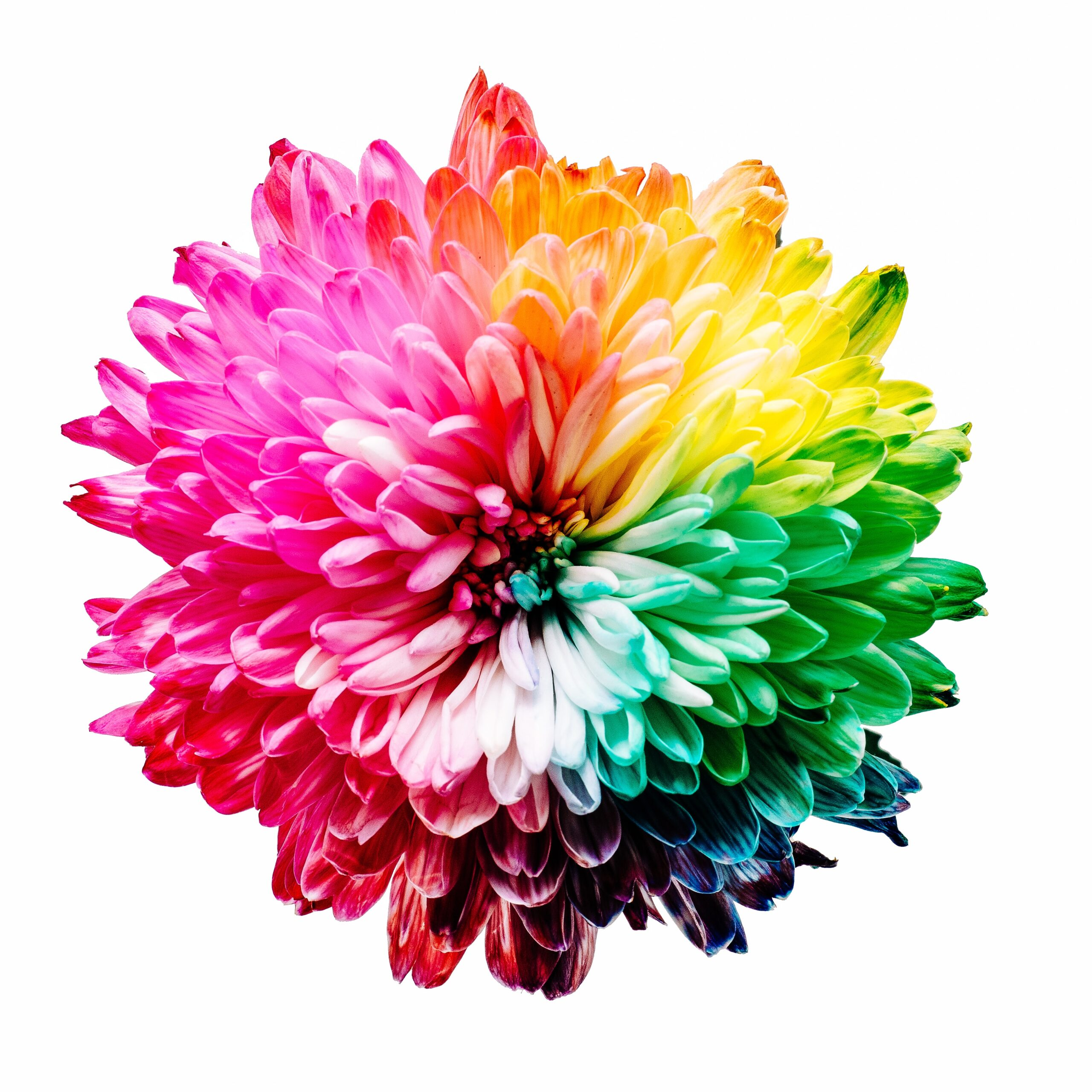 Les couleurs pour un site web professionnel